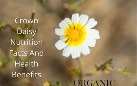 Crown Daisy Nutrition Facts and Health Benefits
